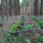 durch Harvester 'umgepflügter' Wald