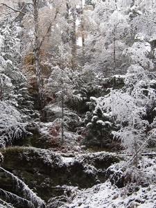 Winterwald am Großen Lorenzstein