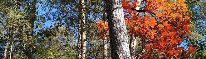 Herbst2013-oben-ronny