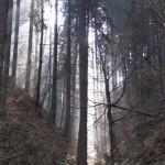 Polenztal 09.03 (4)