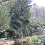 Teich im Rhododendronpark