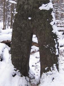 Bild aus dramaturgischen Gründen hier oben - Baum mit 3 Möglichkeiten.