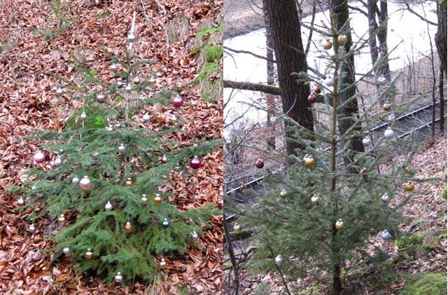 freilebende Weihnachtsbäume