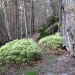 verlassene Wege