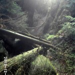 02-Griesgrund-Verbruch-von-oben