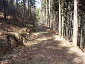Seibtweg nahe Eselsweg / Königstein