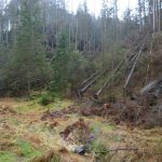 Abzweig Kletterzugang Sommersloch